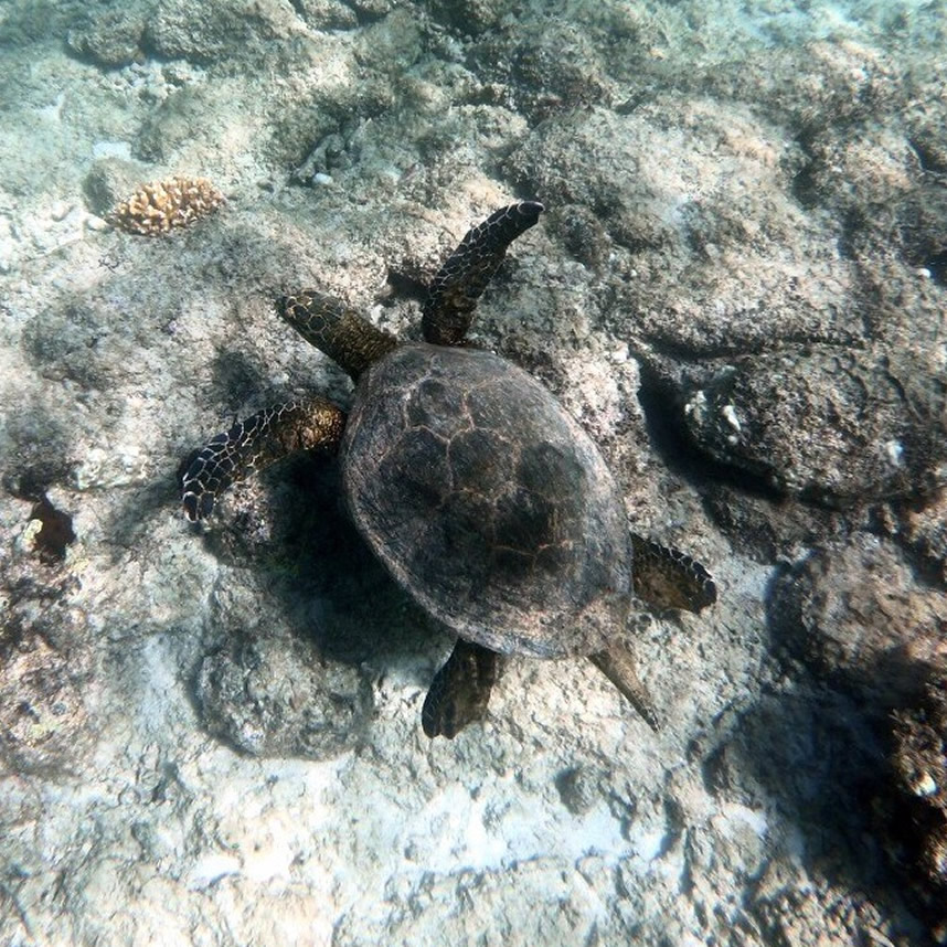 CPSC_snorkeling_tour_slider_2_4a