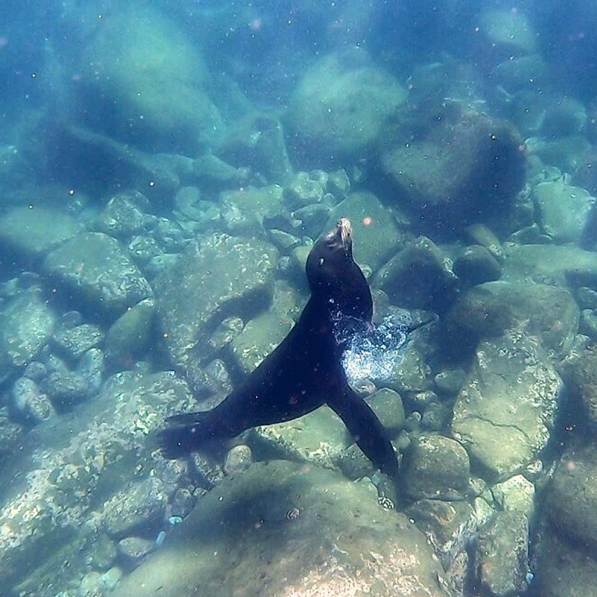 CPSC_snorkeling_tour_slider_2_5a